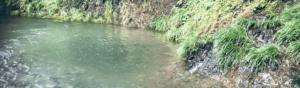 川釣りのポイント