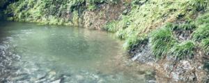 道志川 釣り