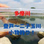 【多摩川小物釣り】登戸~二子玉川でヌマチチブ、カニ、鯉、ウキゴリの釣果!