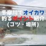 【2020年】多摩川でオイカワを釣るポイント【釣れる場所紹介】