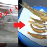 【激ウマ】多摩川で釣ったオイカワとカワムツを料理して食べたら絶品!