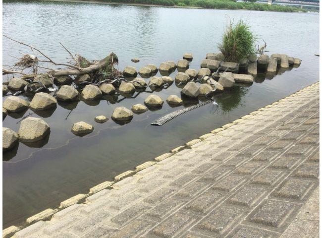 多摩川丸子橋付近