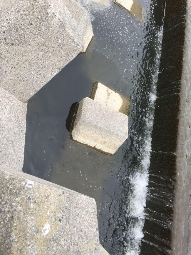 多摩川の釣りポイント登戸~二子玉川③