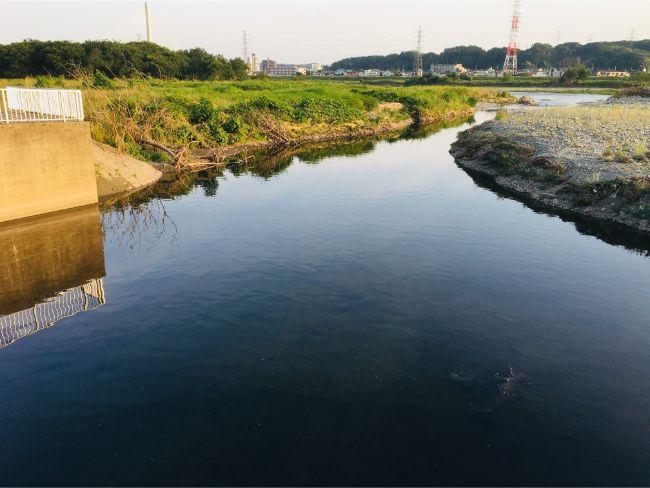 【多摩川釣り】府中市四谷付近