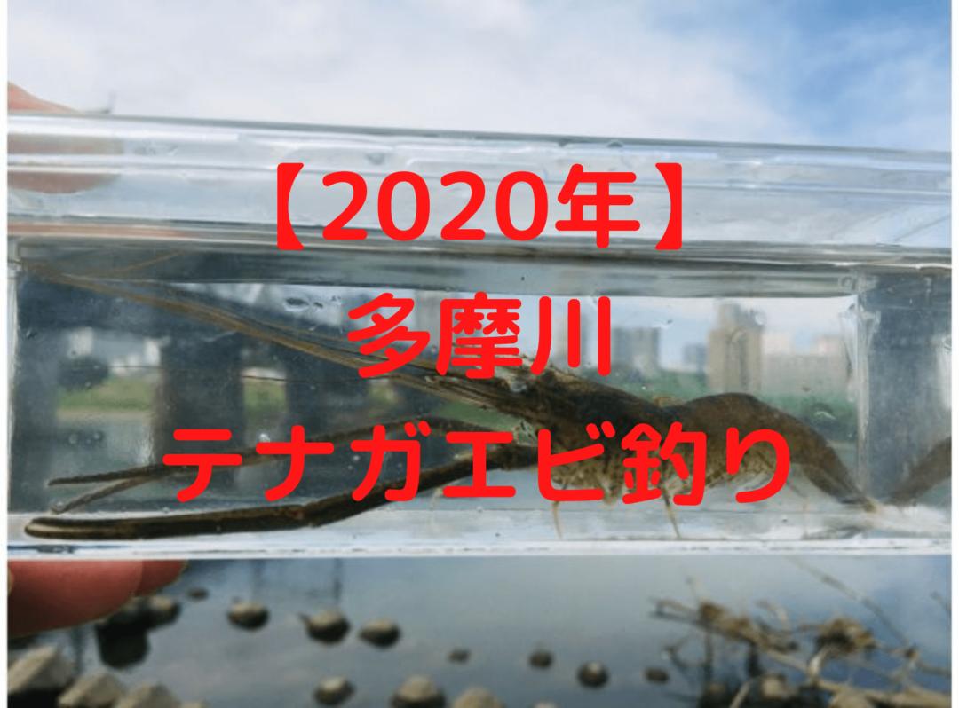 【2020年】多摩川テナガエビ釣り
