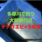 【川崎・大師橋】多摩川でテナガエビとうなぎ釣り【釣行動画あり】