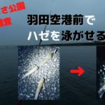 京浜島つばさ公園 釣り調査