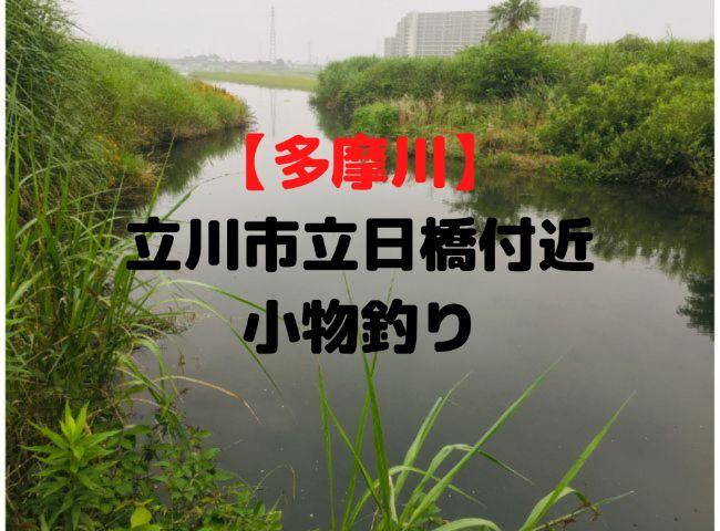 多摩川 立川市立日橋 釣り