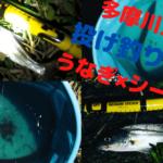 【多摩川大橋夜釣り】多摩川河口でシーバスとうなぎ釣り【2020年】