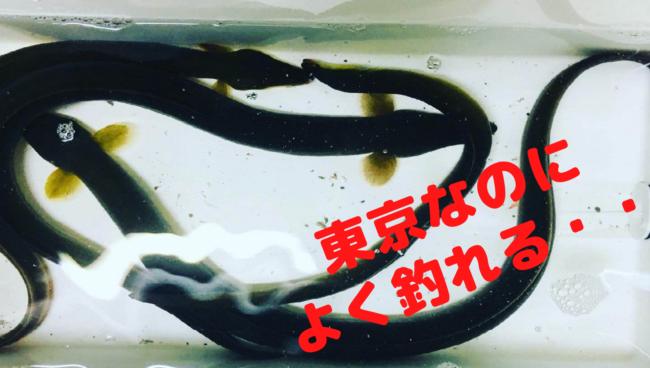 【2020年】東京多摩川でうなぎ釣り【釣行記・仕掛けや餌も紹介】