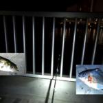 有明北緑道公園 釣り