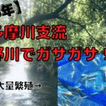 【野川でガサガサ!】都内にある小川は小エビやザリガニの楽園だった