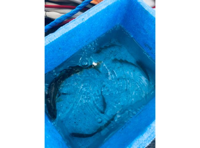 多摩川の魚