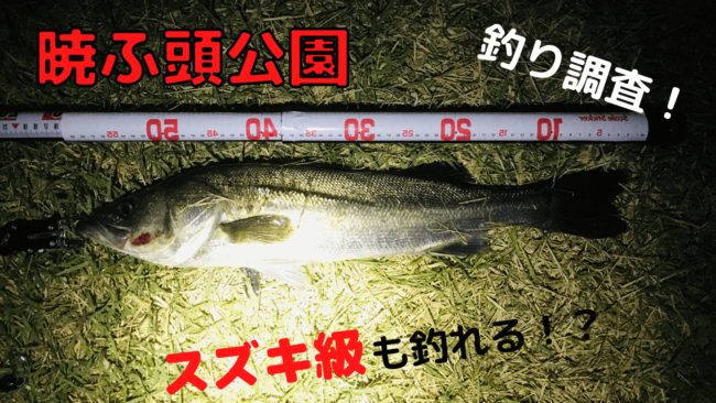 暁ふ頭公園 釣り
