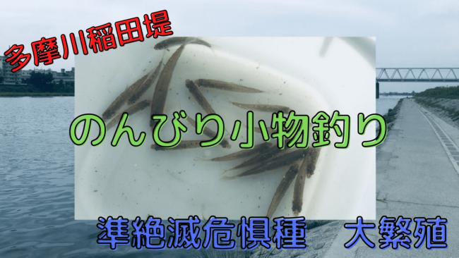 多摩川 稲田堤 釣り