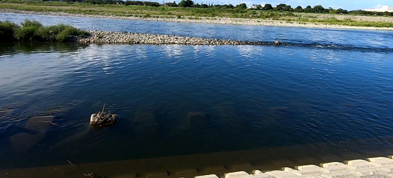 稲城緑地公園 多摩川