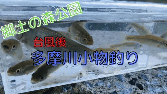 多摩川 小物釣り