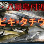 横須賀 タチウオ