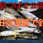 京浜島つばさ公園 サビキ釣り