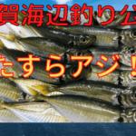 横須賀海辺釣り公園 釣り