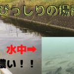 多摩川 水中動画