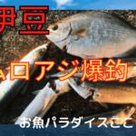 西伊豆(宇久須) 釣り