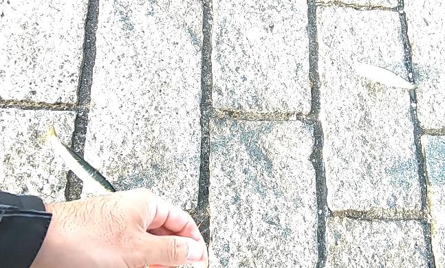 赤レンガパーク イワシ2