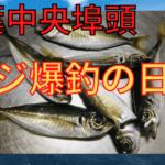 千葉港 釣り