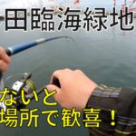 杉田臨海緑地 釣り