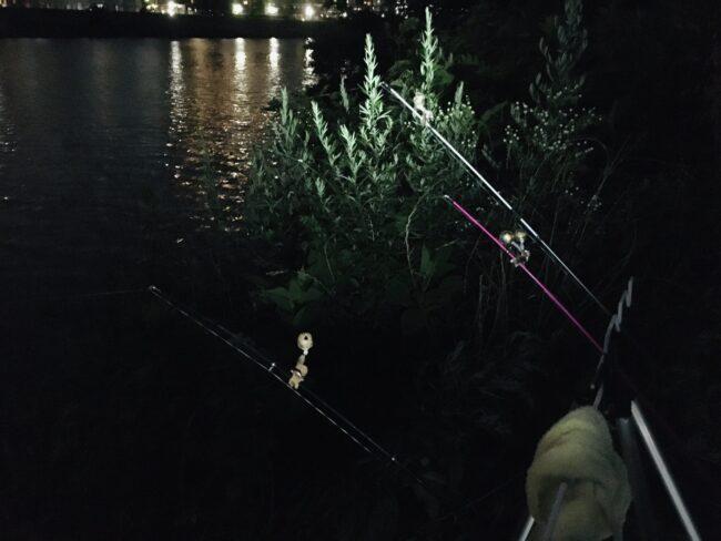 多摩川 うなぎ釣り